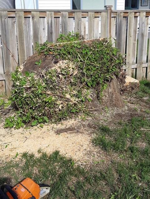 tree stump removal kelowna