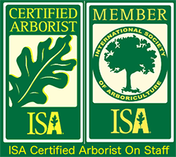 stump busters certified arborist