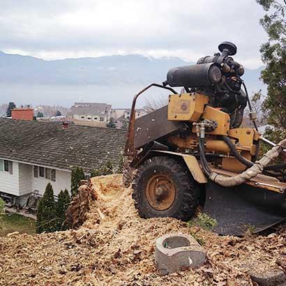 kelowna stump removal