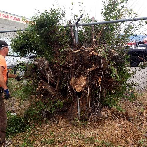 kelowna tree services